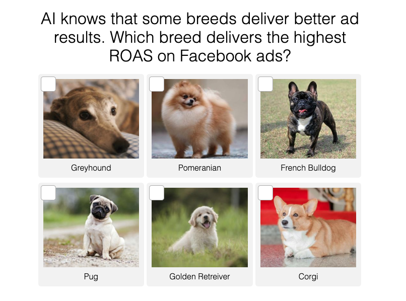 Marketing AI: How does it know what dog gives the best ROI?